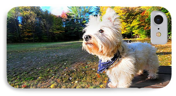 Reminiscing Westie IPhone Case by Catherine Reusch Daley