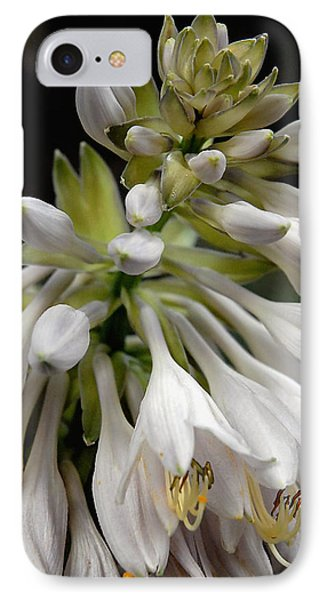 Renaissance Lily IPhone Case by Marie Hicks
