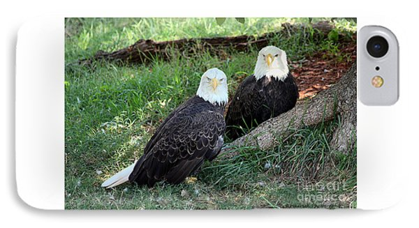 IPhone Case featuring the photograph Resting Bald Eagles by Sheila Brown