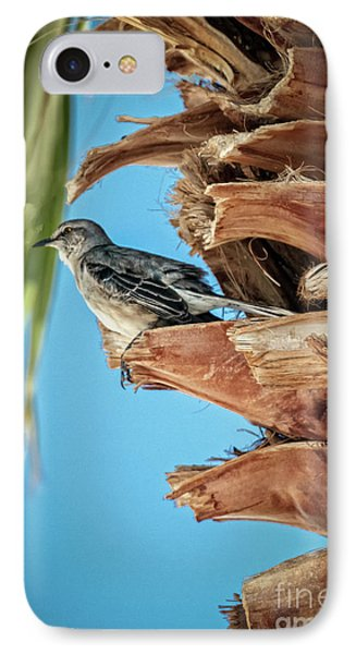 IPhone Case featuring the photograph Resting Mockingbird by Robert Bales