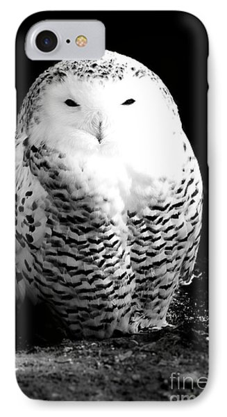 Resting Snowy Owl IPhone Case by Darcy Michaelchuk