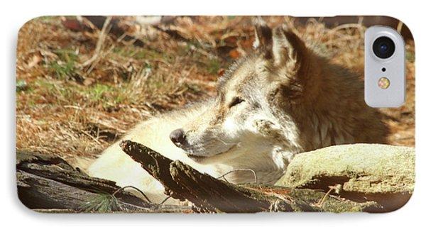 Resting Wolf Phone Case by Karol Livote