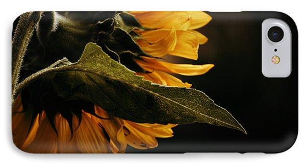IPhone Case featuring the photograph Reticent Sunflower by Douglas MooreZart