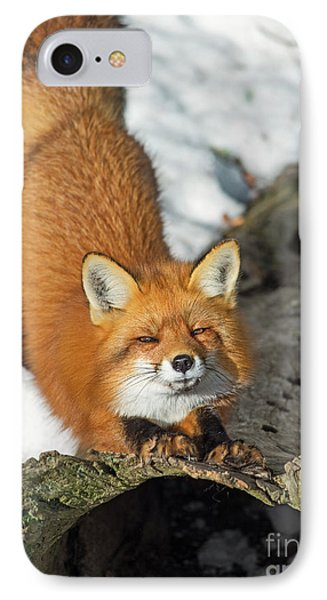 IPhone Case featuring the photograph Reynard The Fox by Nina Stavlund