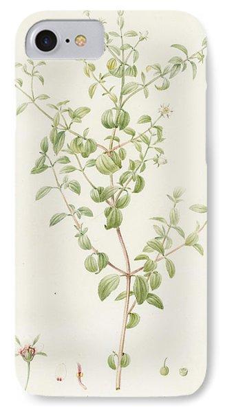 Rhexia Glandulosa IPhone Case