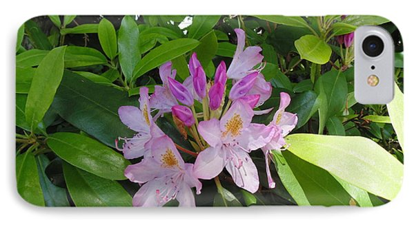 Rhododendron IPhone Case by Daun Soden-Greene