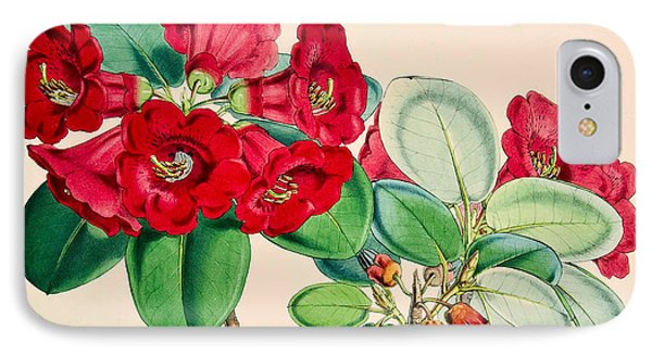 Rhododendron Thomsonii IPhone Case by Joseph Dalton Hooker