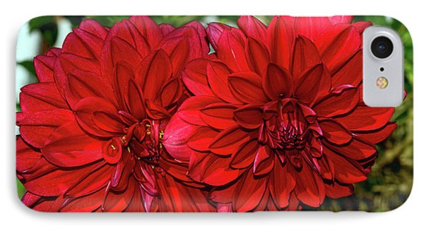 IPhone Case featuring the photograph Rich Red Dahlias By Kaye Menner by Kaye Menner