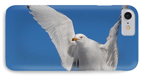 Ring Billed Gull In Flight Phone Case by Mircea Costina Photography