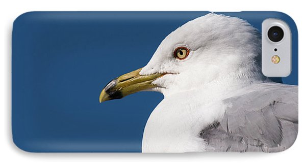 IPhone Case featuring the photograph Ring-billed Gull Portrait by Onyonet  Photo Studios