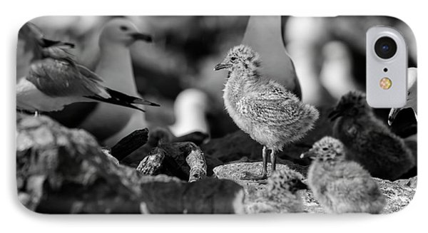 Ring-billed Gulls 2016-1 IPhone Case by Thomas Young