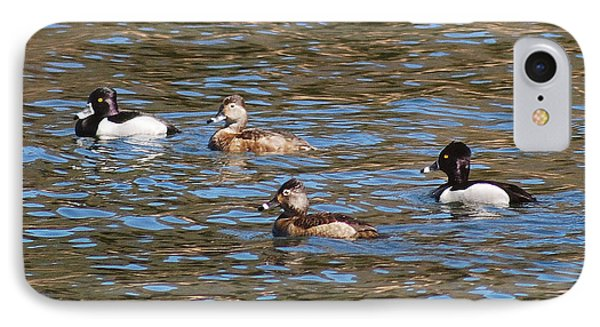 Ring Neck Ducks 20120314_d IPhone Case by Tina Hopkins