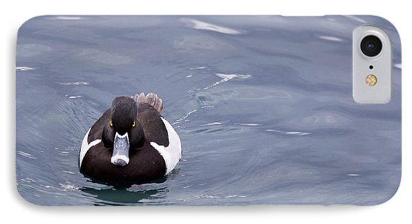 Ring-necked Duck IPhone Case by Afrodita Ellerman