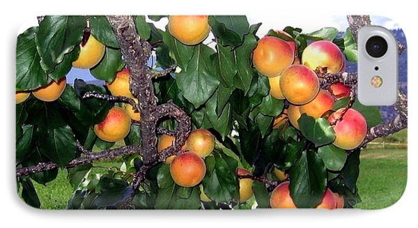 Ripe Apricots Phone Case by Will Borden