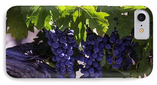 Ripe Grapes IPhone Case by Garry Gay