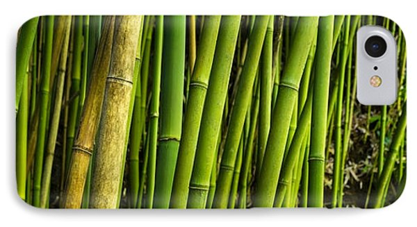 Road To Hana Bamboo Panorama - Maui Hawaii IPhone Case by Brian Harig