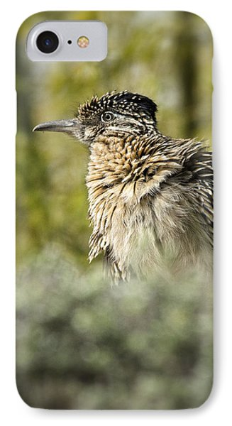 Roadrunner On Guard  IPhone Case by Saija  Lehtonen
