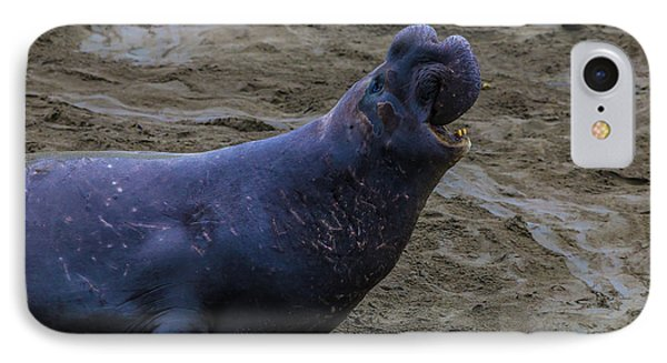 Roaring Bull Elephant Seal IPhone Case
