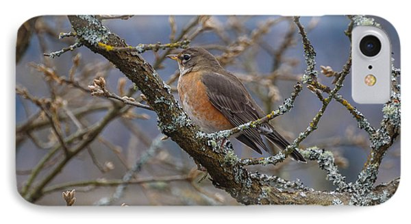 Robin In A Tree IPhone Case by Keith Boone