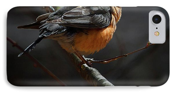 Robin In The Light Square IPhone Case by Bill Wakeley