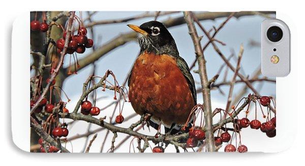 Robin In Winter IPhone Case