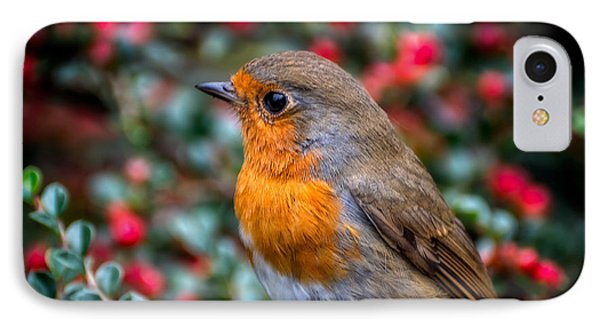 Robin Redbreast IPhone Case by Adrian Evans