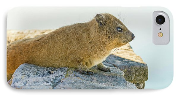 Rock Hyrax On Table Mountain Cape Town South Africa IPhone Case