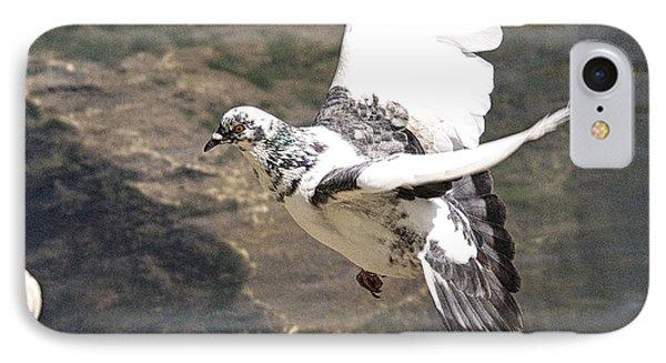 Rock Pigeon In Flight IPhone Case