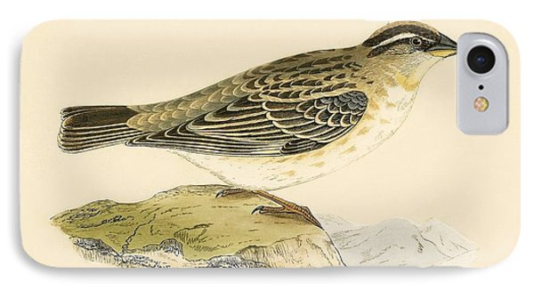 Rock Sparrow IPhone Case