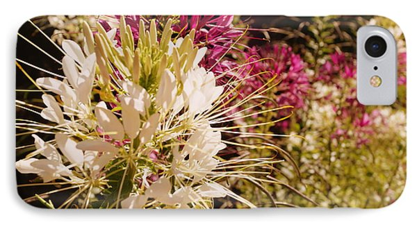Rocky Mountain Bee Plant IPhone Case by Beth Collins