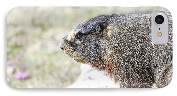 Rocky Mountain Marmot In Spring IPhone Case by Dan Sproul