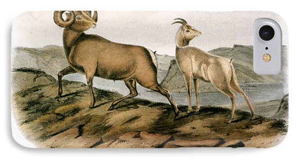 Rocky Mountain Sheep, 1846 IPhone Case by Granger