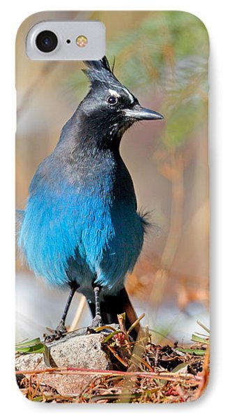Rocky Mountain Steller's Jay IPhone Case