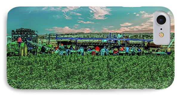 Romaine Lettuce Harvest IPhone Case by Robert Bales