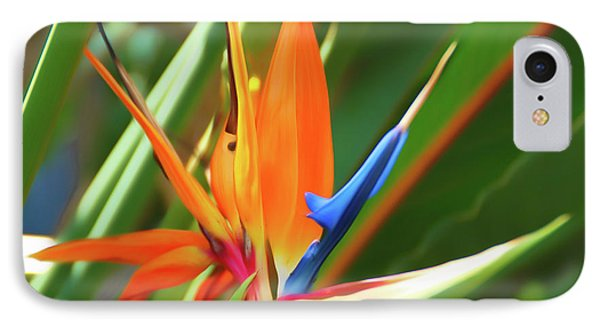 IPhone Case featuring the photograph Romantic Skies Bird Of Paradise by Aimee L Maher Photography and Art Visit ALMGallerydotcom
