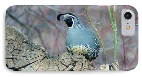 Rooster Quail  Phone Case by Jeff Swan