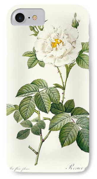 Rosa Alba Flore Pleno IPhone Case by Pierre Joseph Redoute