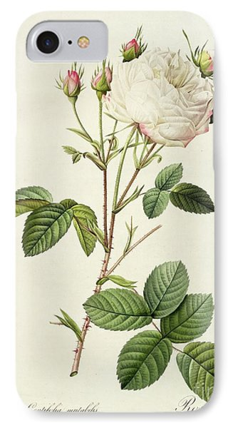 Rosa Centifolia Mutabilis IPhone Case