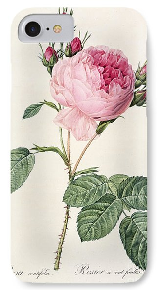 Rosa Centifolia IPhone Case by Pierre Joseph Redoute