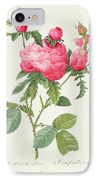Rosa Centifolia Prolifera Foliacea Phone Case by Pierre Joseph Redoute