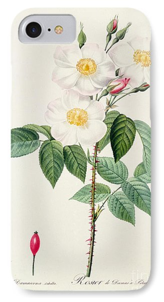 Rosa Damascena Subalba IPhone Case