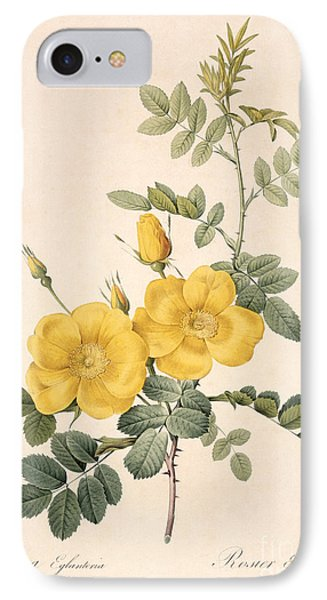 Rosa Eglanteria IPhone Case by Pierre Joseph Redoute