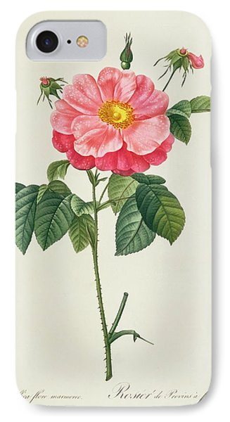Rosa Gallica Flore Marmoreo IPhone Case by Pierre Joseph Redoute