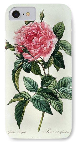 Rosa Gallica Regalis IPhone Case by Pierre Joseph Redoute