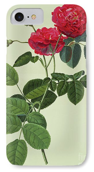 Rosa Holoferica Multiplex IPhone Case by Georg Dionysius Ehret