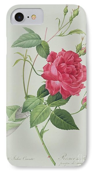 Rosa Indica Cruenta IPhone Case