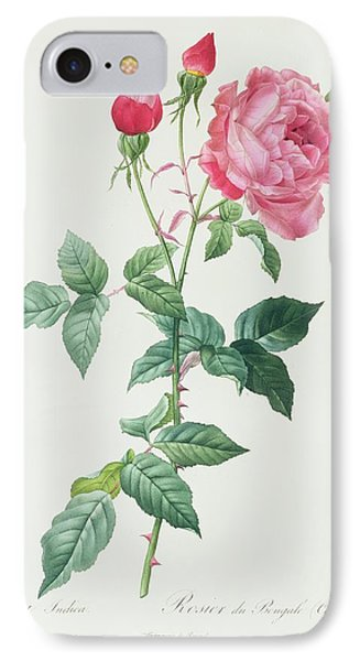 Rosa Indica IPhone Case by Pierre Joseph Redoute