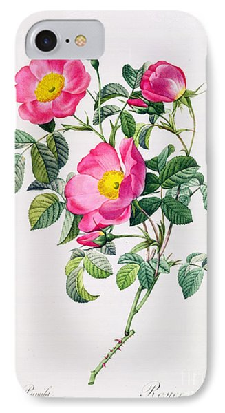 Rosa Lumila IPhone Case by Pierre Joseph Redoute