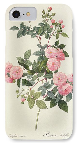 Garden iPhone 7 Case - Rosa Multiflora Carnea by Pierre Joseph Redoute