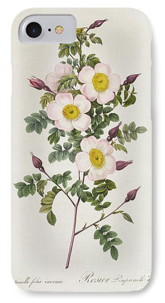 Rosa Pimpinelli Folia Inermis IPhone Case